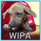 Wipa, Chiot à adopter