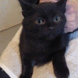 Offino, Chaton à adopter