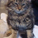 Ouatine, Chaton à adopter