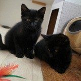 Olaf & orion, Chaton à adopter