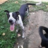 Ohio, jeune chien croisé non lof, Chien à adopter