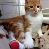 Nami, Chat à adopter