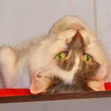 Aglae les beaux yeux, Chat à adopter