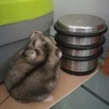 Pchit, Animal à adopter
