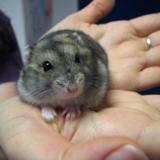 Balthazar, Animal à adopter