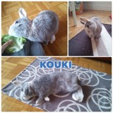 Kouki, Animal à adopter