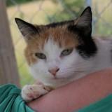 Carla, Chat gouttière à adopter