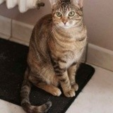 Muscari, Chat à adopter