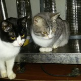 Emile et petia, Chaton à adopter