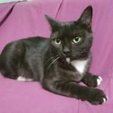 Edgar, Chat à adopter