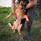 Kira, Chien à adopter