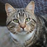 Percy, Chat gouttière à adopter