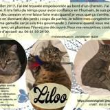 Liloo, Chaton à adopter