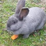 Nephtys, Animal à adopter