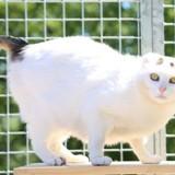 Désirée, Chat gouttière à adopter