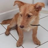 Caouette, Chiot à adopter