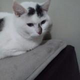 Cerise, Chat à adopter