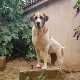 Opus, Chien à adopter
