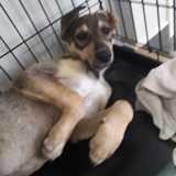 Iska, Chiot à adopter