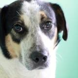 Lupo, Chien à adopter