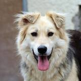Roxy, Chien à adopter