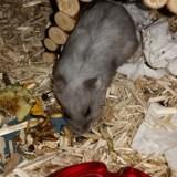 Xena, Animal à adopter