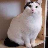 Poupette, Chat à adopter