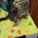 Deheneb, Chaton à adopter