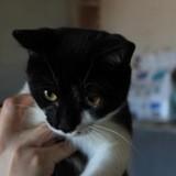 Kiko, Chaton à adopter