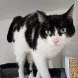 Aegon, Chat européen à adopter