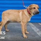 James, Chien à adopter