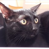 Nina, Chat à adopter