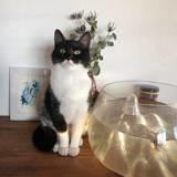 Naya, Chat européen à adopter