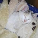 Nora, Chaton à adopter