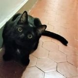 Kiwi, Chaton à adopter