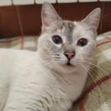 Helen, Chat à adopter