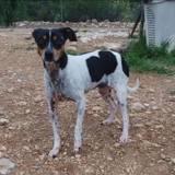 Berta, Chien à adopter