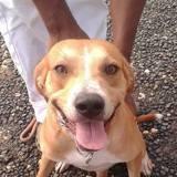 Chaka, jeune chien croisé, Chien à adopter