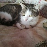 Cristal, Chat à adopter