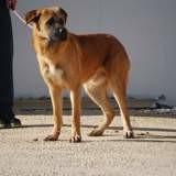 Nando, Chiot à adopter