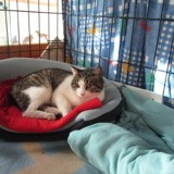 Netty, Chat européen à adopter
