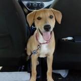 Ava, Chiot à adopter