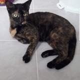 Akésia, Chat à adopter