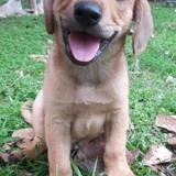 Titan, Chiot à adopter