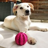 Blanche, Chiot à adopter