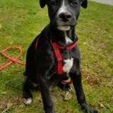 Sooky, Chiot à adopter