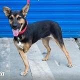 Trisha, Chiot à adopter