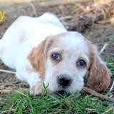 Hefty, Chiot à adopter