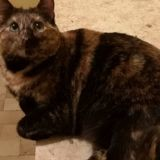 Praline, Chat à adopter