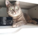 Newpy, Chat à adopter